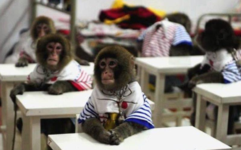 Τεράστιο φιάσκο Κεραμέως με την μαϊμού Επιτροπή «Γονέων» 25 (;) ιδιωτικών σχολείων: Πλαστογράφηση υπογραφών από ανύπαρκτους, ή ανενημέρωτους για το κείμενο Συλλόγους, επαγγελματίας «γονέας» (χωρίς μαθητή σε ιδιωτικό σχολείο) ο οργανωτής!